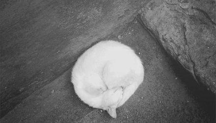 О кошках и смысле жизни